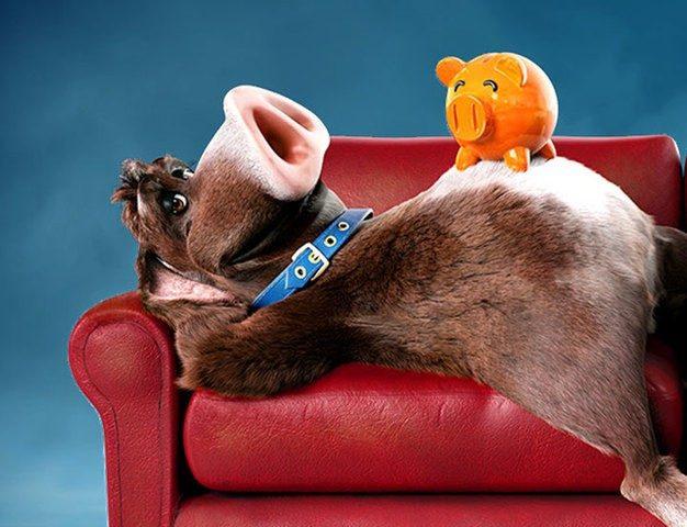 Der Sparschweinehund auf der Couch